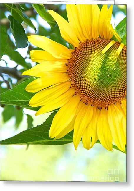Recently Sold -  - Yellow Sunflower Greeting Cards - Shades of a Sunflower Greeting Card by Robin Erisman