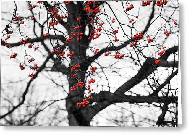 Yield Greeting Cards - Shades Of Autumn - Reds And Blacks Greeting Card by Alexander Senin