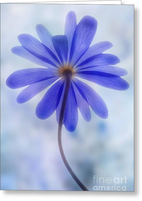 Anemone Greeting Cards - Shades of blue II Greeting Card by John Edwards