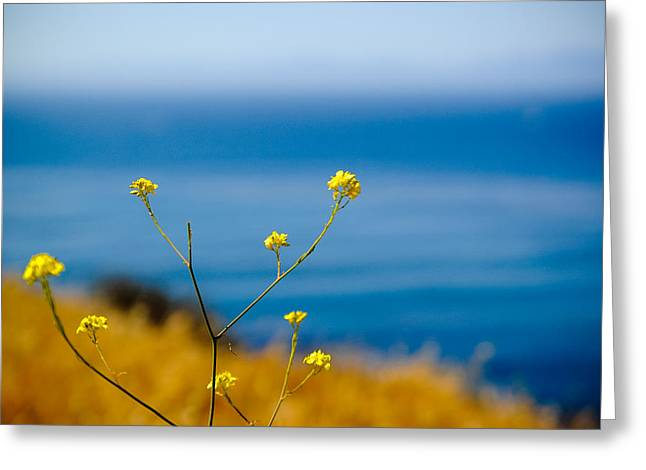 John Kennedy Greeting Cards - Shades of Gold and Blue Greeting Card by John Kennedy