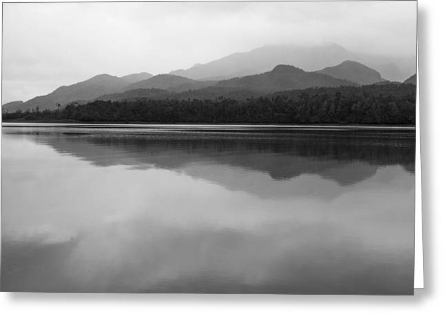 Coastal Forest Greeting Cards - Shades of Gray in the Rain Greeting Card by Tim Grams