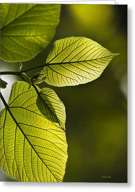 Printed Greeting Cards - Shades Of Green Greeting Card by Christina Rollo