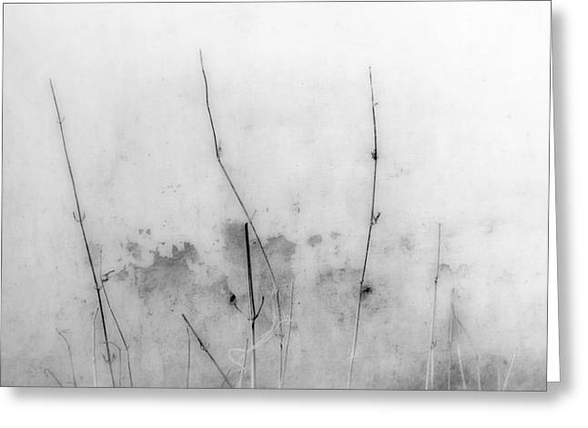 Plant Stretched Canvas Greeting Cards - Shades of Grey Greeting Card by Prakash Ghai