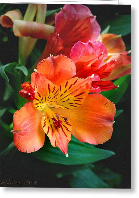 Shades Of Red Greeting Cards - Shades of Orange Greeting Card by  Bill Voizin