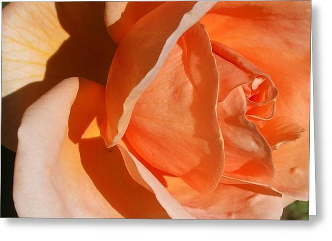 Michel Croteau Greeting Cards - Shades of roses Greeting Card by Michel Croteau