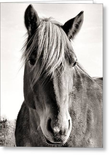Horse Portrait Photographs Posters Greeting Cards - Shades of Summer Greeting Card by Michelle Milano