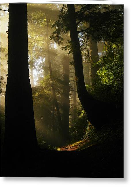 Pine Needles Greeting Cards - Shadow Dreams Greeting Card by Jeff  Swan