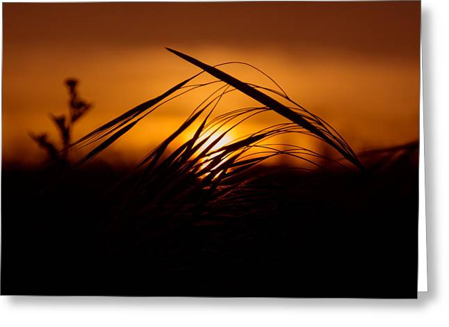 Back-light Greeting Cards - Shadow Grass Greeting Card by Chris Fletcher