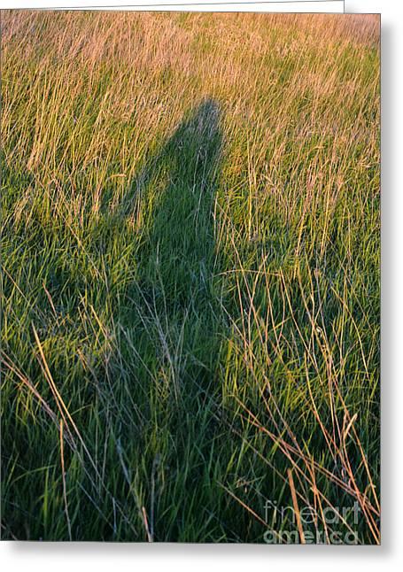 Long Shadows Greeting Cards - Shadow in the Grass Greeting Card by Jill Battaglia