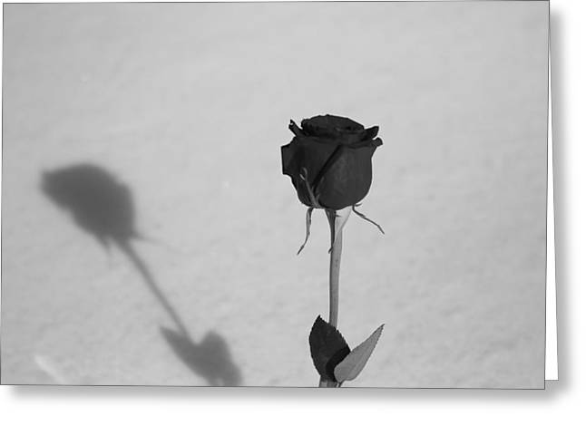 Rose Petal Heart Greeting Cards - Shadow Of A Rose Greeting Card by Dan Sproul