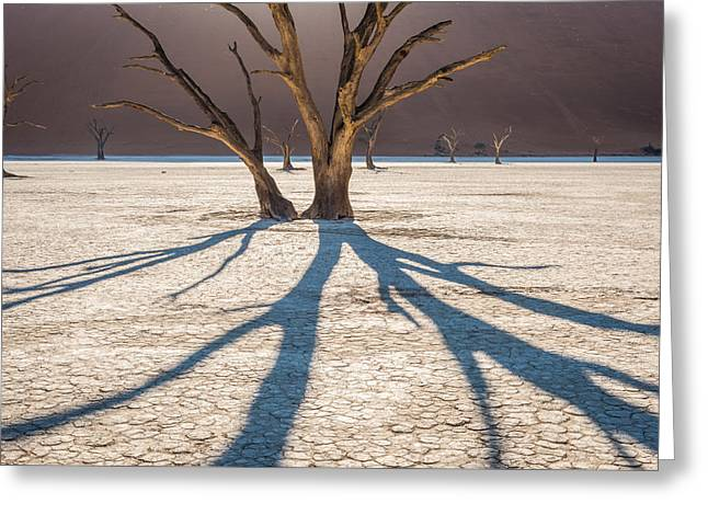 Cracked Greeting Cards - Shadow of the Camel Thorn - Dead Vlei Photograph by Duane Miller Greeting Card by Duane Miller