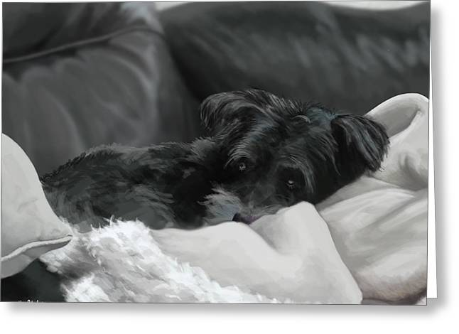 Dog On Couch Greeting Cards - Shadow the Schnauzer Greeting Card by Matt Upholz
