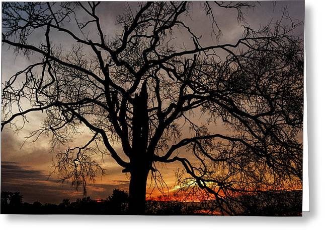 Smyrna Greeting Cards - Shadow Tree Greeting Card by Brett Engle
