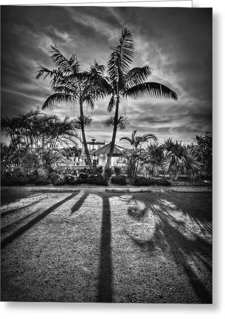 Gulf Coast Florida Greeting Cards - Shadow Waltz Greeting Card by Evelina Kremsdorf