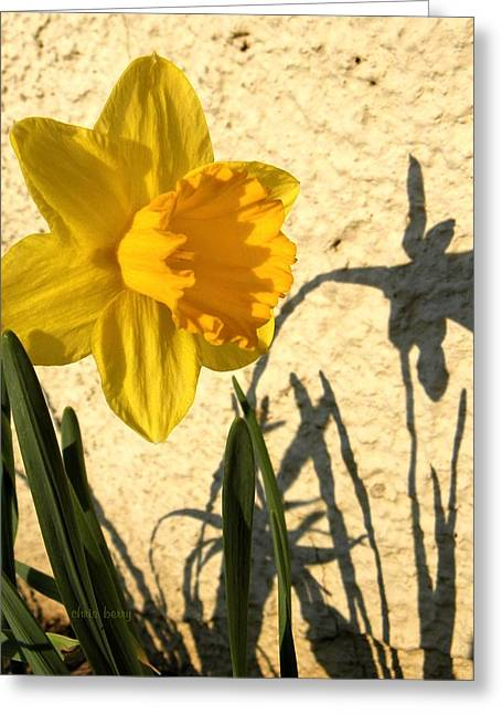 Daffodils Photographs Greeting Cards - Shadowing Me Greeting Card by Chris Berry