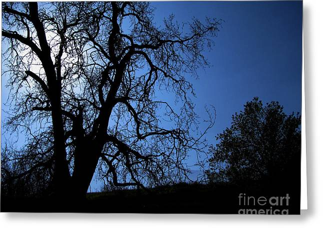 Photo Effects Greeting Cards - Shadowlands 1 Greeting Card by Bedros Awak