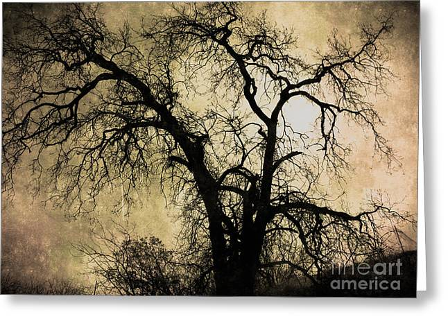 Earthly Greeting Cards - Shadowlands 13 Greeting Card by Bedros Awak