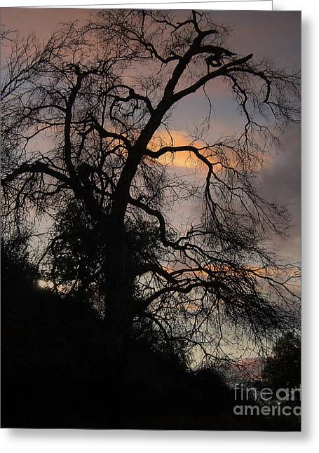 Photo Effects Greeting Cards - Shadowlands 5 Greeting Card by Bedros Awak