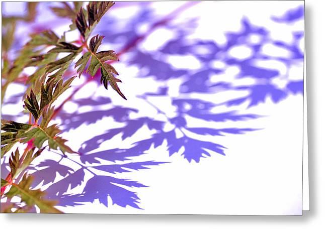 Garden Art Pyrography Greeting Cards - Shadows Greeting Card by Eiwy Ahlund
