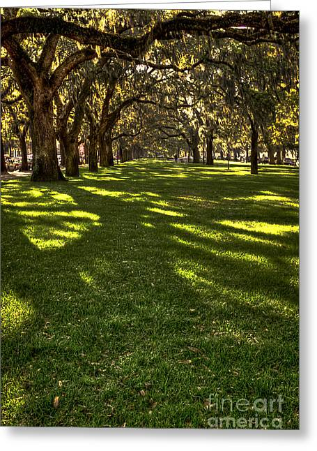 Chatham Greeting Cards - Shadows of Emmet Park Savannah Greeting Card by Reid Callaway
