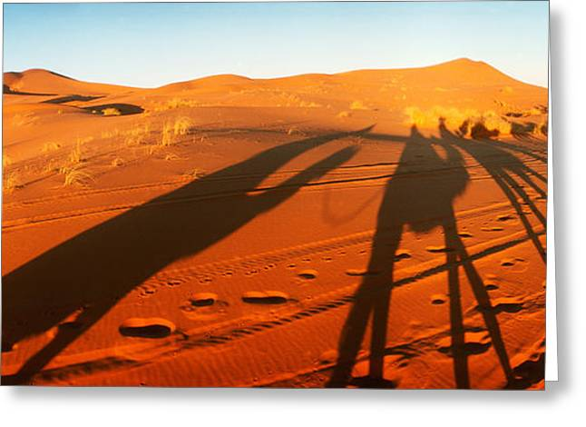 Sahara Sunlight Greeting Cards - Shadows Of Camel Riders In The Desert Greeting Card by Panoramic Images