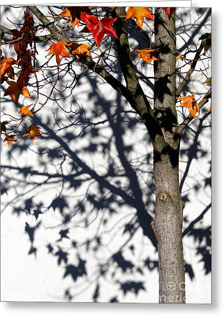 Cmlbrown Greeting Cards - Shadows Of Fall Greeting Card by CML Brown