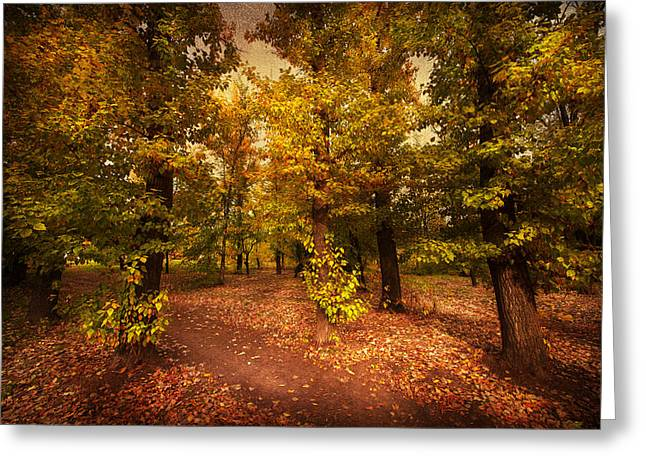 Trees In Autumn Greeting Cards - Shadows of Forest Greeting Card by Svetlana Sewell