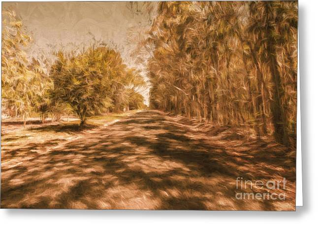 Shadows On Autumn Lane Greeting Card by Jorgo Photography - Wall Art Gallery