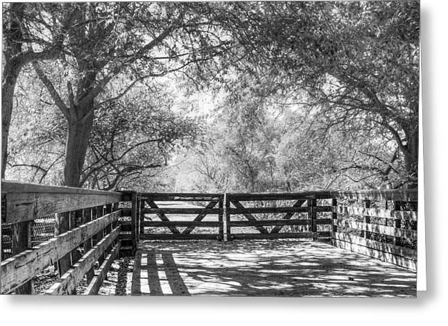 Foggy Beach Greeting Cards - Shadows on the Trail Greeting Card by Debra and Dave Vanderlaan
