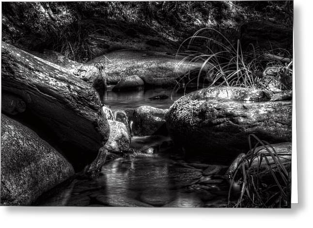 Trout Fishing Greeting Cards - Shadowy Home For Trout in Black and White Greeting Card by Greg Mimbs