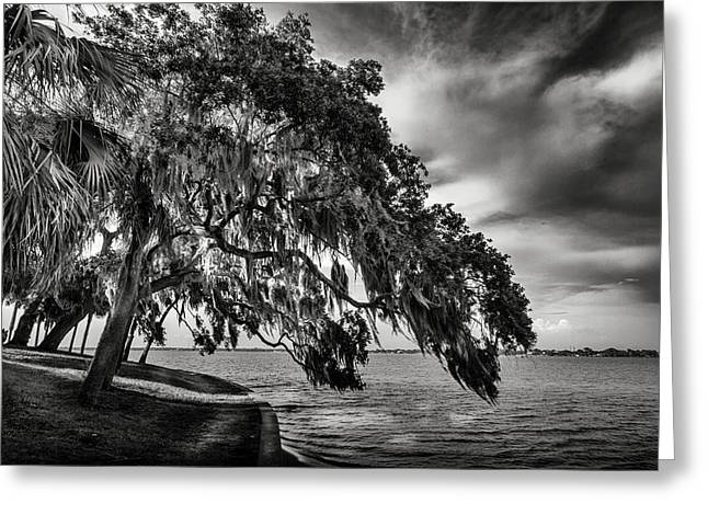 Sea Wall Greeting Cards - Shady Oak Greeting Card by Marvin Spates