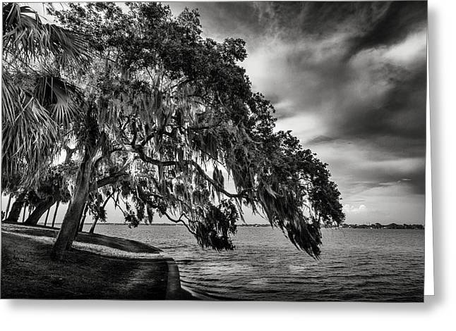 Shady Oak Greeting Card by Marvin Spates