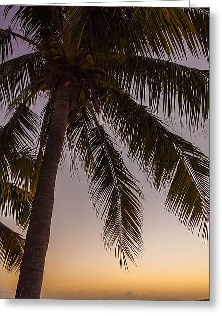 Shady Palm Greeting Card by Kristopher Schoenleber