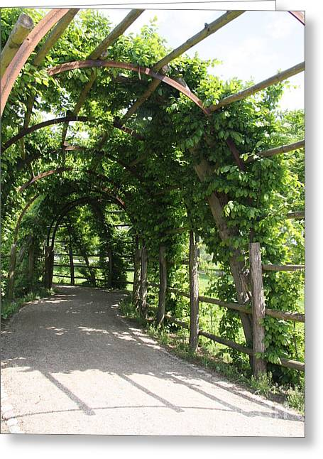 Trellis Greeting Cards - Shady Way Greeting Card by Christiane Schulze Art And Photography