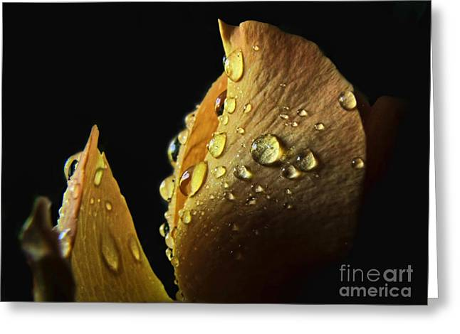 Petals With Droplets Greeting Cards - Shaft of Light Greeting Card by Debbie Portwood