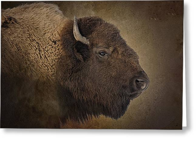Buffalo Greeting Cards - Shaggy One Greeting Card by Ron  McGinnis