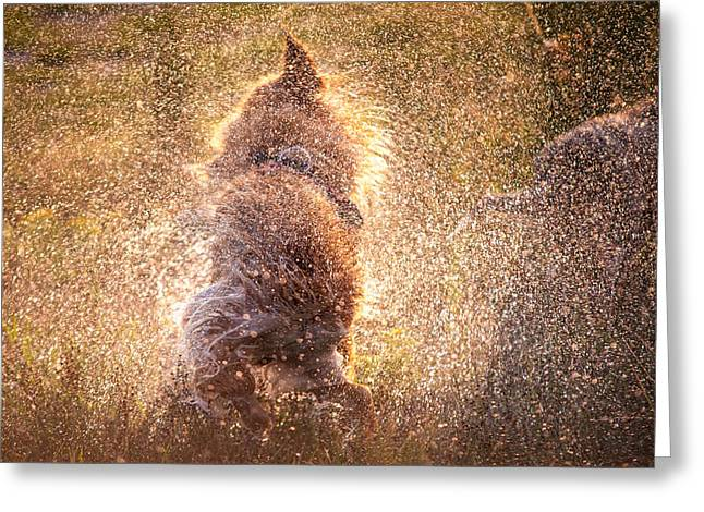 Wet Dogs Greeting Cards - Shaking Beast Greeting Card by Jenny Rainbow