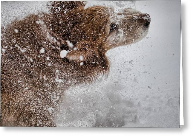 Dogs In Snow. Greeting Cards - Shaking off the snow Greeting Card by John Crothers