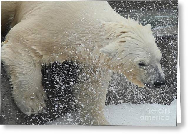 Struckle Greeting Cards - Shaking Off Water Greeting Card by Kathleen Struckle