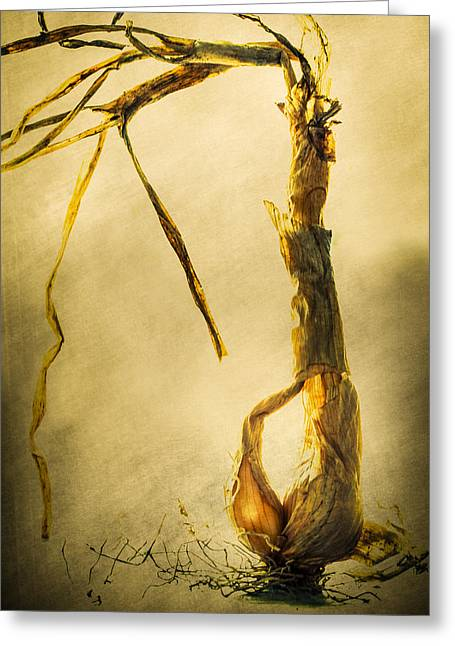 Harvest Art Greeting Cards - Shallot Greeting Card by Constance Fein Harding
