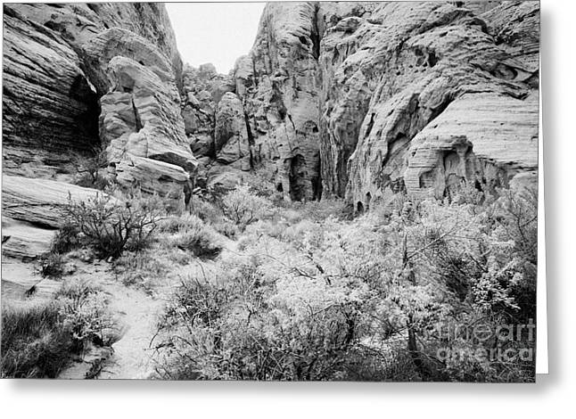 Narrow Canyons Greeting Cards - Shallow Canyon In Sandstone Rock Formations Valley Of Fire State Park Nevada Usa Greeting Card by Joe Fox