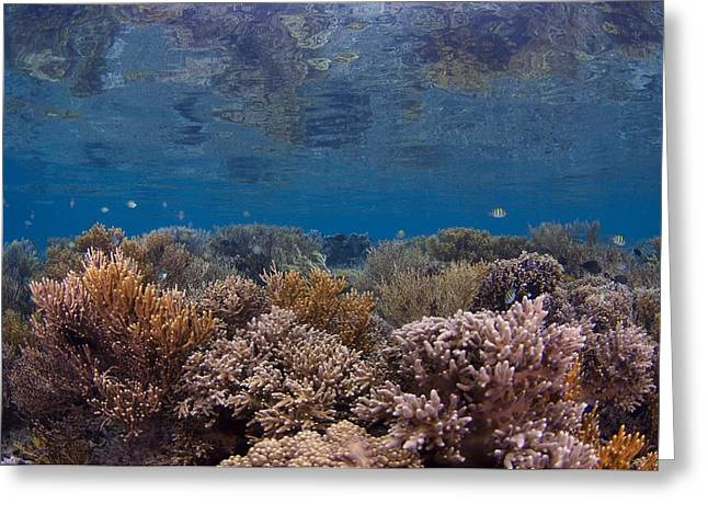 Reef Fish Greeting Cards - Shallow reef in Indonesia Greeting Card by Science Photo Library