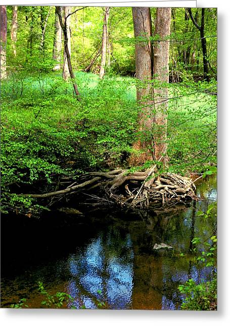 Tree Roots Greeting Cards - Shallow Roots Greeting Card by Stacy Moore