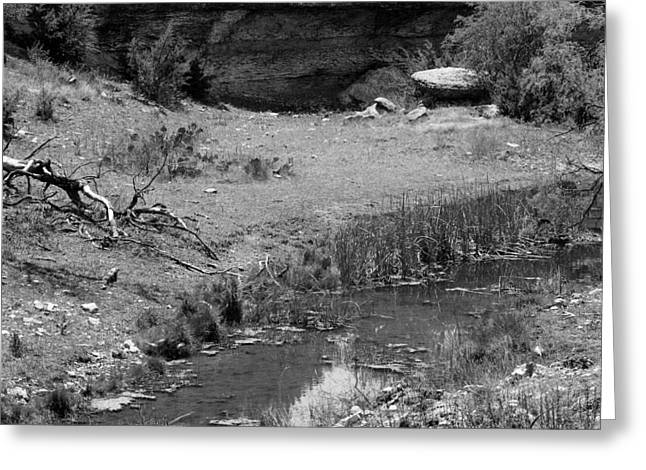 Stagnant Greeting Cards - Shallow Spring Greeting Card by Rick Collins