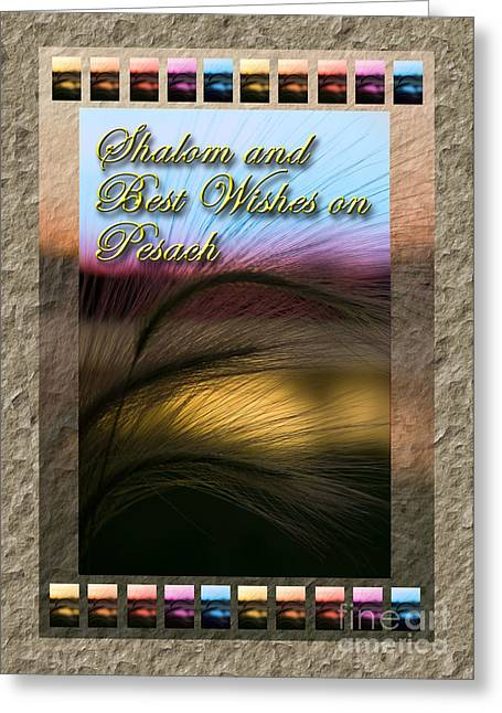 Wildlife Celebration Greeting Cards - Shalom and Best Wishes on Pesach Grass Sunset Greeting Card by Jeanette K