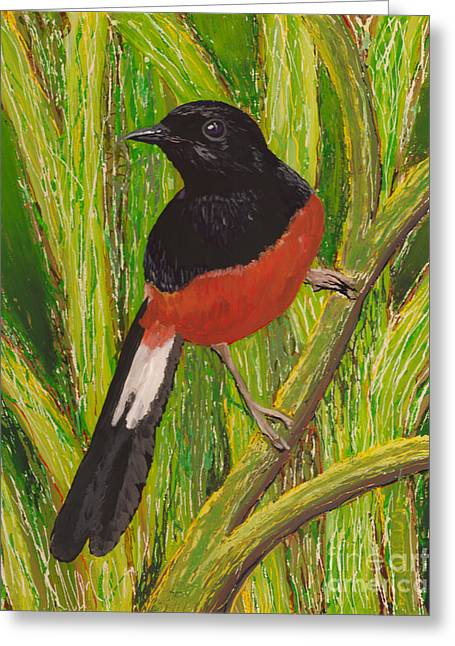 Fauna Glass Art Greeting Cards - Shama Greeting Card by Anna Skaradzinska