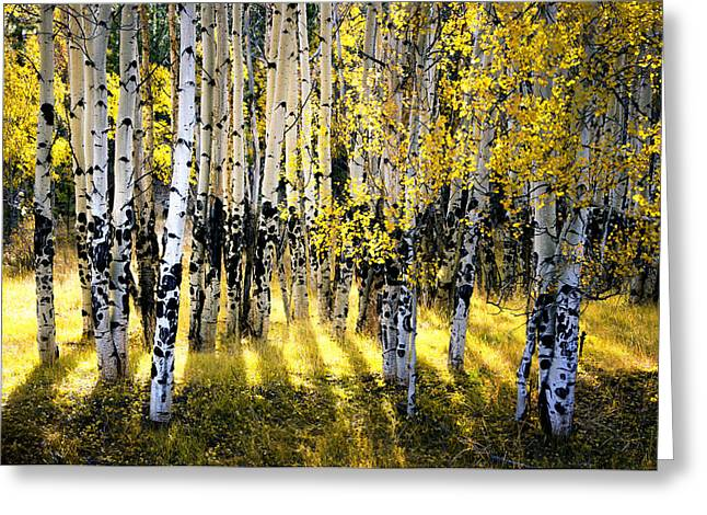 Peaceful Images Greeting Cards - Radiance Greeting Card by The Forests Edge Photography - Diane Sandoval