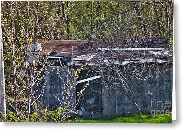 Outbuildings Greeting Cards - Shanty Greeting Card by Crystal Harman