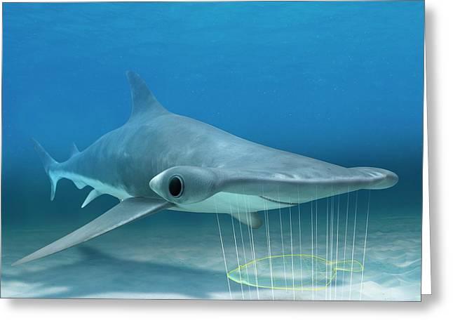 Shark Electroreception Greeting Card by Claus Lunau