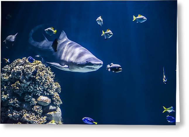 Shark Digital Art Greeting Cards - Shark hunting Greeting Card by Jaroslaw Grudzinski